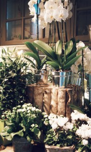 my-shop-by-vues-du-jardin-décoration-shop