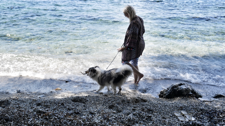 Comment passer un été serein avec son animal