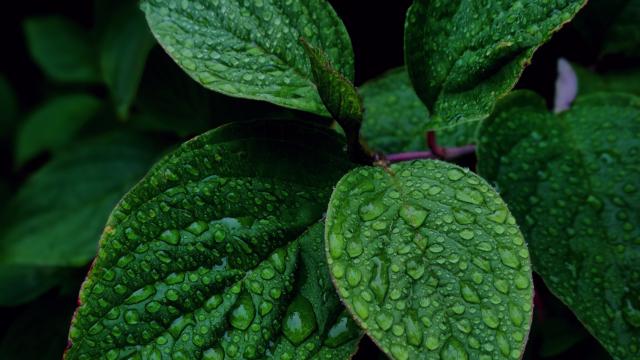 huile essentielle menthe poivree